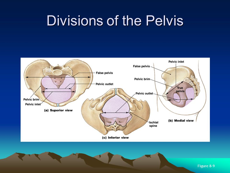 Divisions of the Pelvis