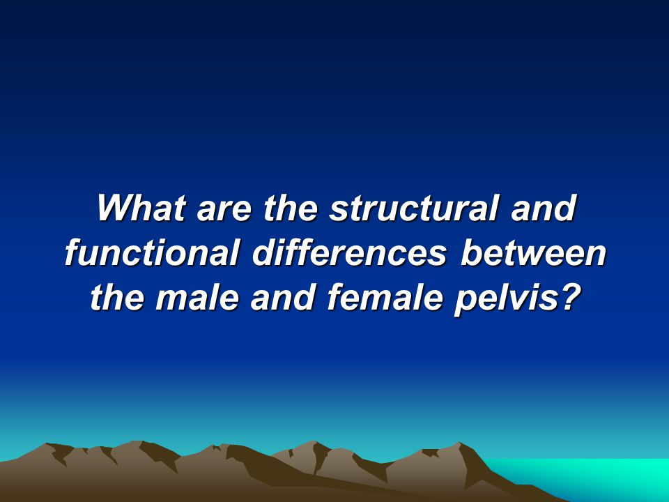 What are the structural and functional differences between the male and female pelvis