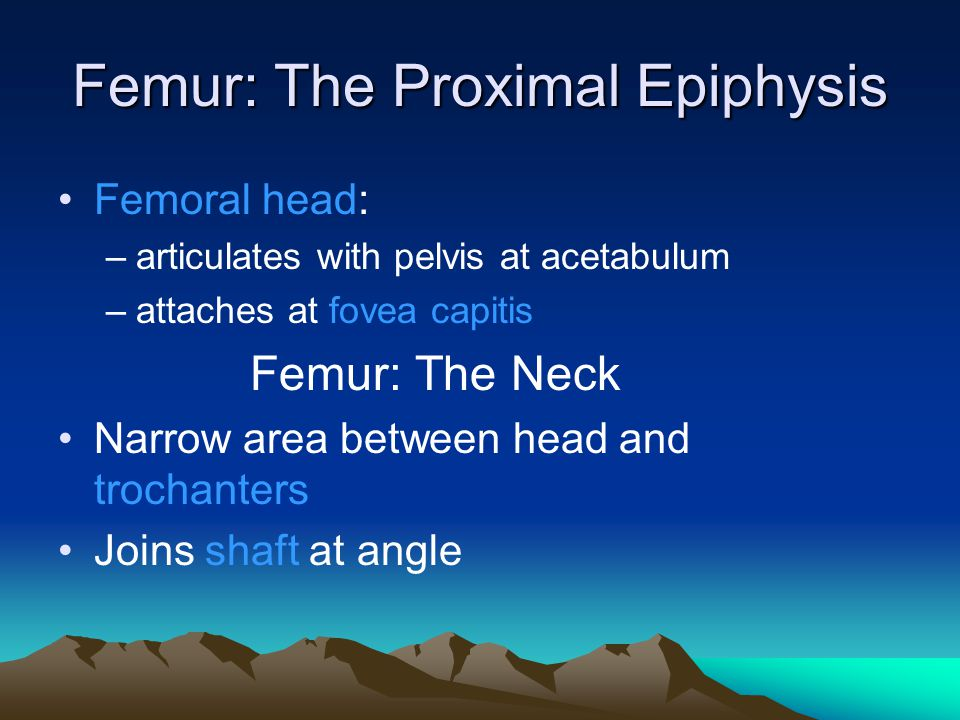 Femur: The Proximal Epiphysis