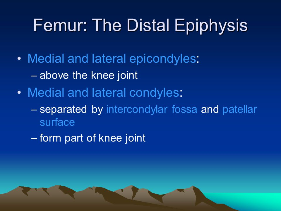 Femur: The Distal Epiphysis
