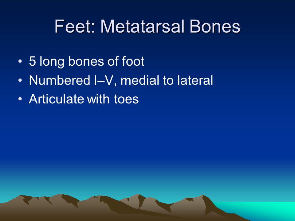 Feet: Metatarsal Bones