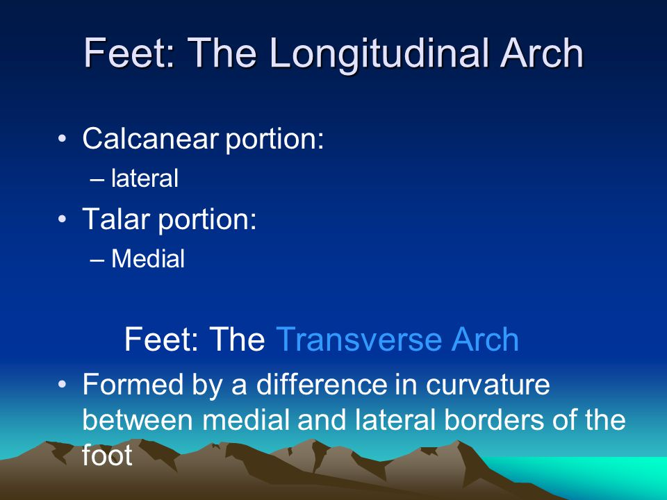 Feet: The Longitudinal Arch
