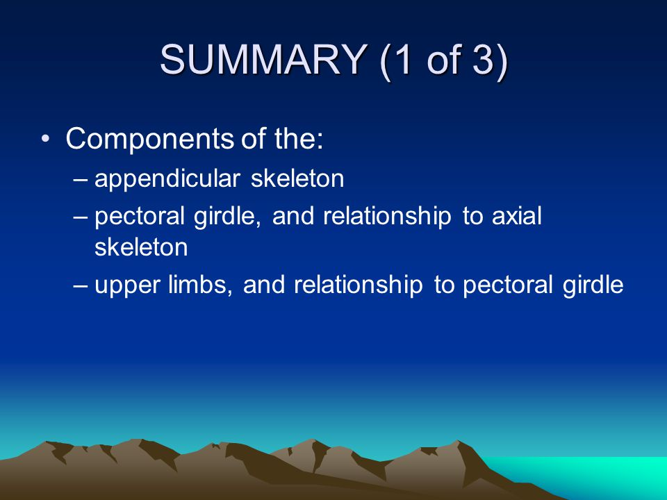 SUMMARY (1 of 3) Components of the: appendicular skeleton