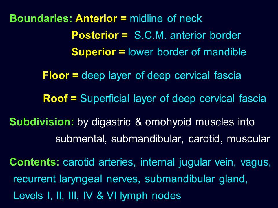 Boundaries: Anterior = midline of neck. Posterior = S. C. M