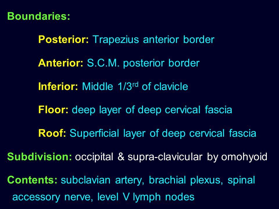 Boundaries: Posterior: Trapezius anterior border. Anterior: S.C.M. posterior border. Inferior: Middle 1/3rd of clavicle.
