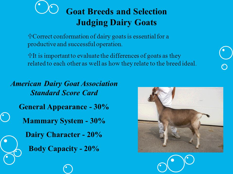 Goat Breeds and Selection Judging Dairy Goats