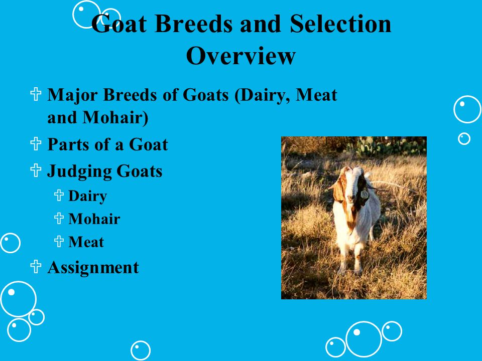 Goat Breeds and Selection Overview