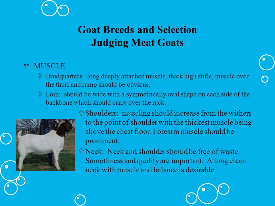 Goat Breeds and Selection Judging Meat Goats
