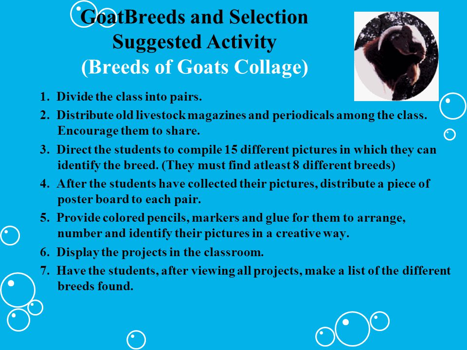 GoatBreeds and Selection Suggested Activity (Breeds of Goats Collage)