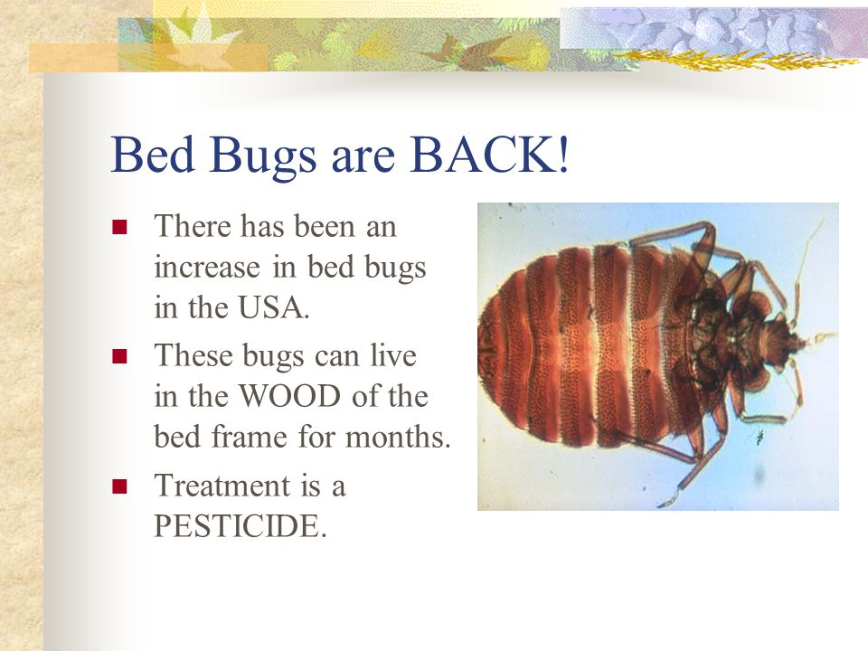 Bed Bugs are BACK! There has been an increase in bed bugs in the USA.