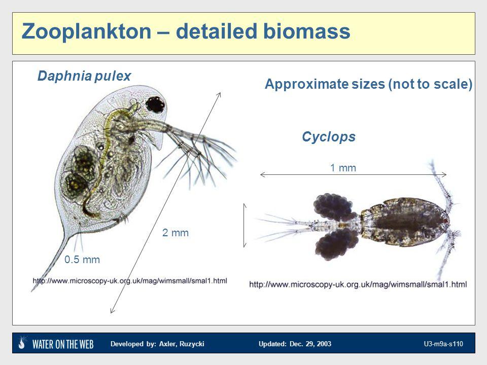 Zooplankton – detailed biomass