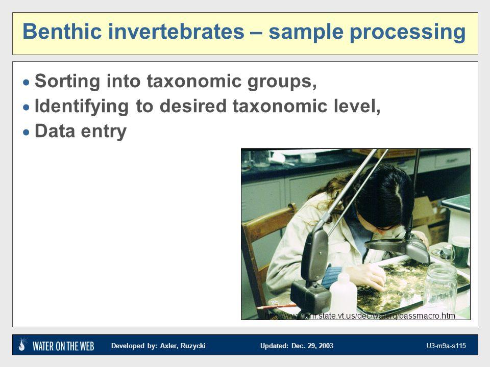 Benthic invertebrates – sample processing