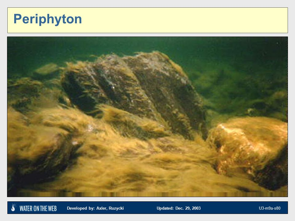 Periphyton Photo for section change