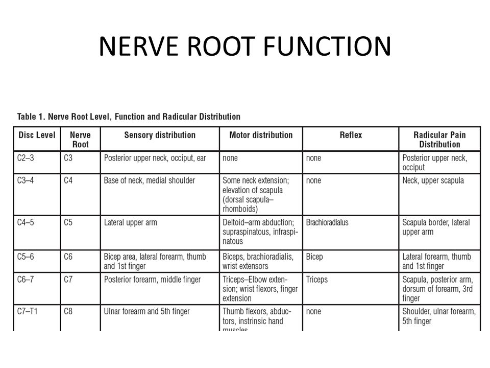 NERVE ROOT FUNCTION