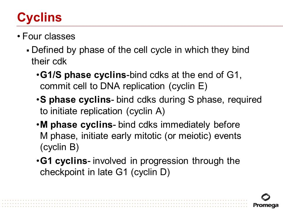 Cyclins Four classes. Defined by phase of the cell cycle in which they bind their cdk.