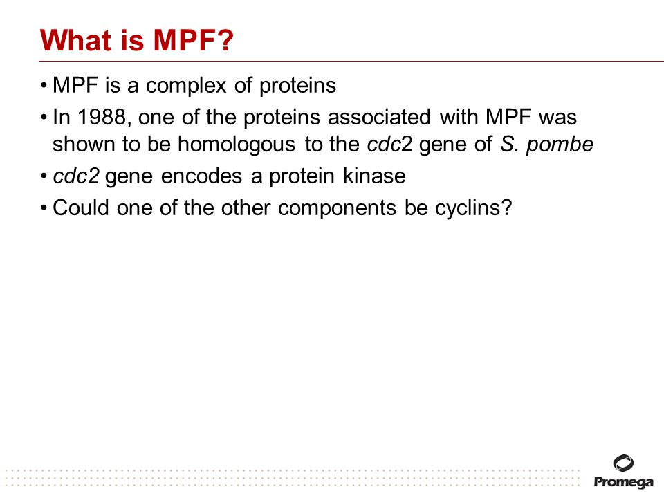 What is MPF MPF is a complex of proteins