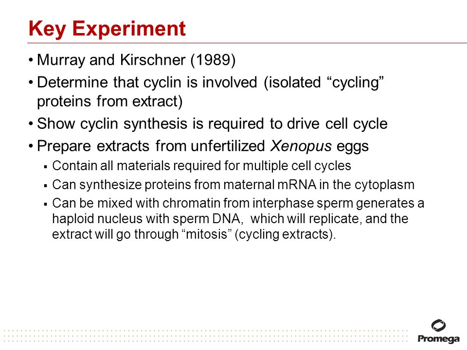 Key Experiment Murray and Kirschner (1989)