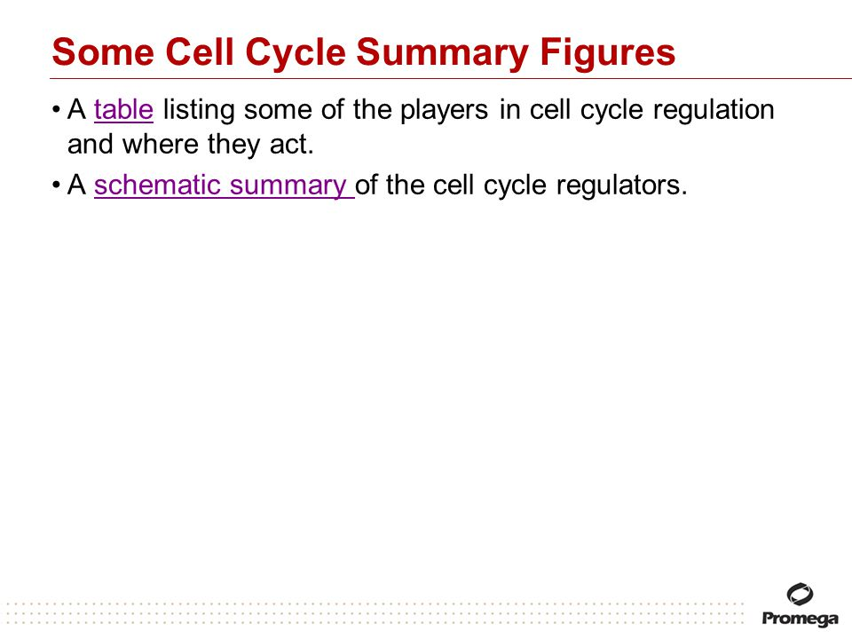 Some Cell Cycle Summary Figures