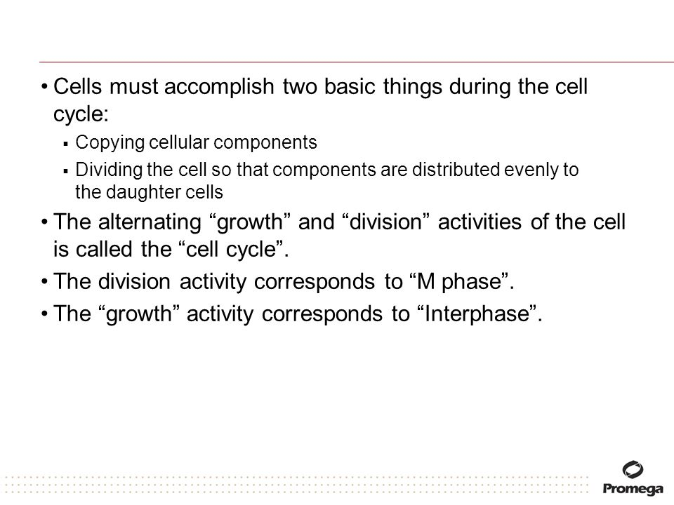 Cells must accomplish two basic things during the cell cycle: