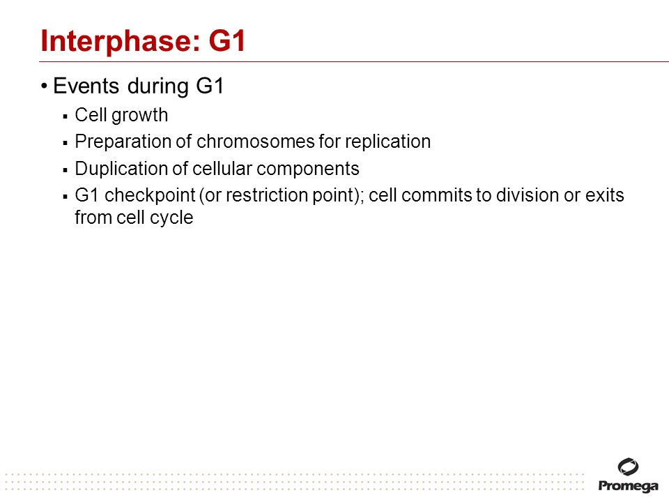 Interphase: G1 Events during G1 Cell growth