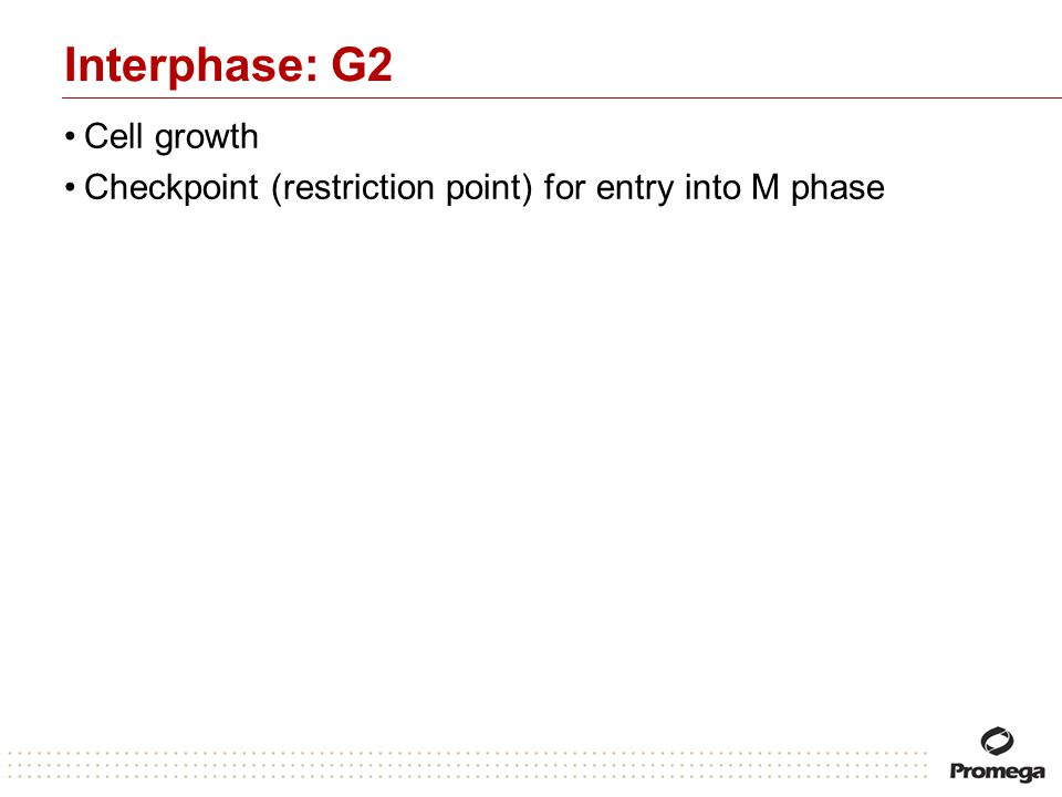 Interphase: G2 Cell growth
