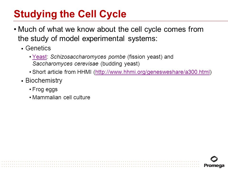 Studying the Cell Cycle