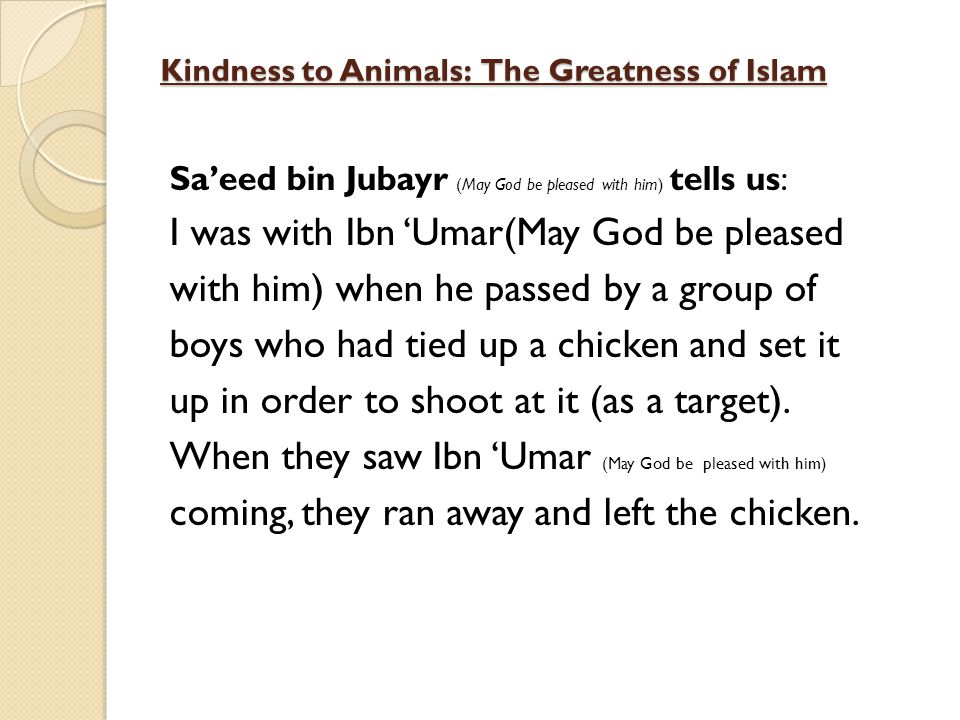 Kindness to Animals: The Greatness of Islam