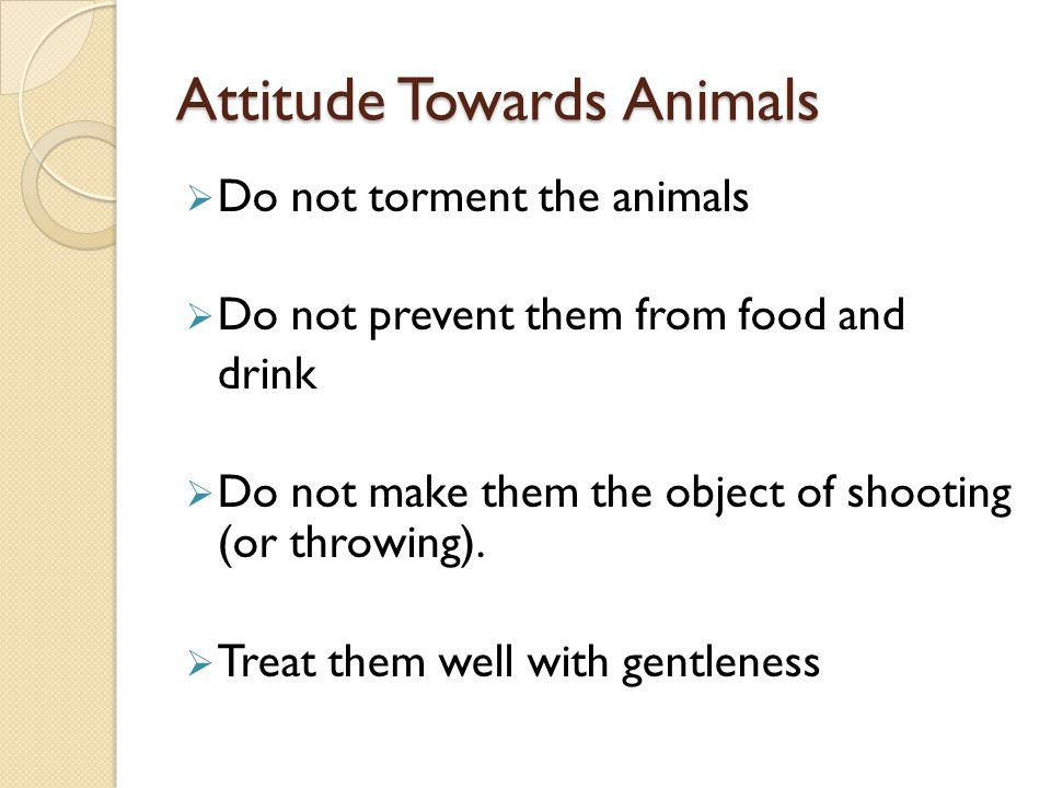 Attitude Towards Animals
