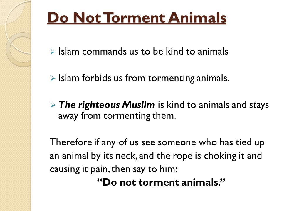 Do not torment animals.