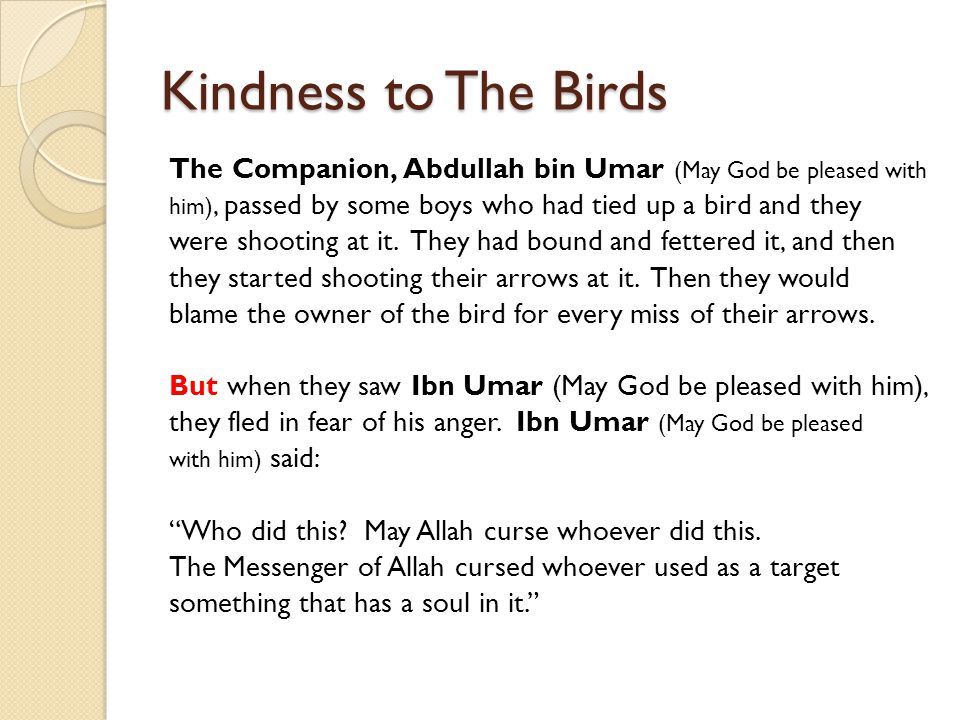 Kindness to The Birds The Companion, Abdullah bin Umar (May God be pleased with. him), passed by some boys who had tied up a bird and they.