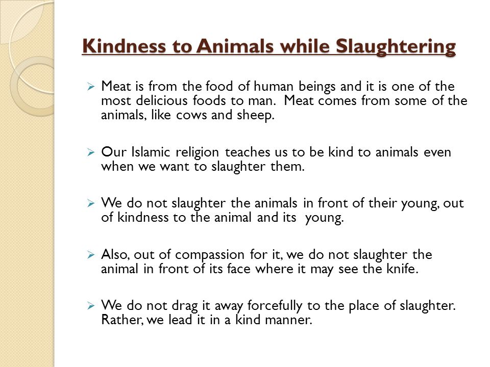 Kindness to Animals while Slaughtering