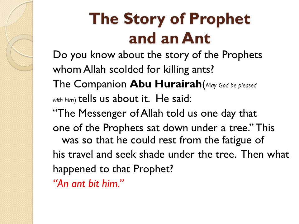The Story of Prophet and an Ant