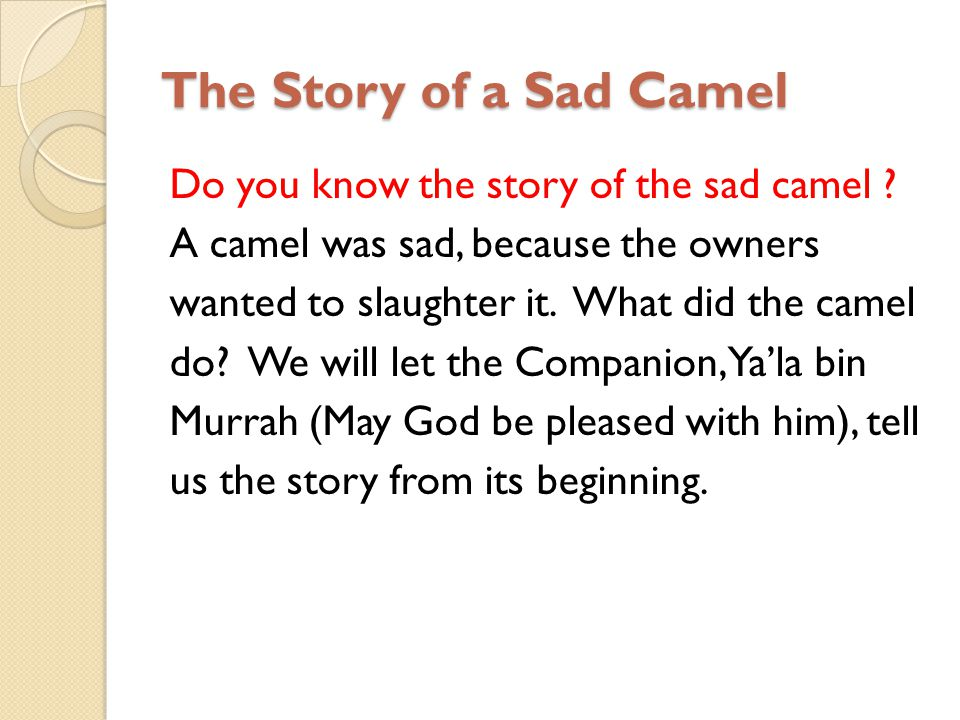 The Story of a Sad Camel