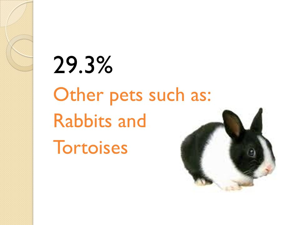 29.3% Other pets such as: Rabbits and Tortoises