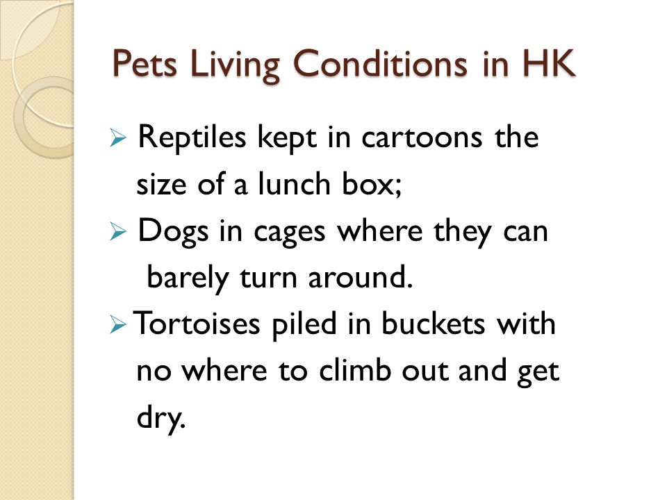 Pets Living Conditions in HK