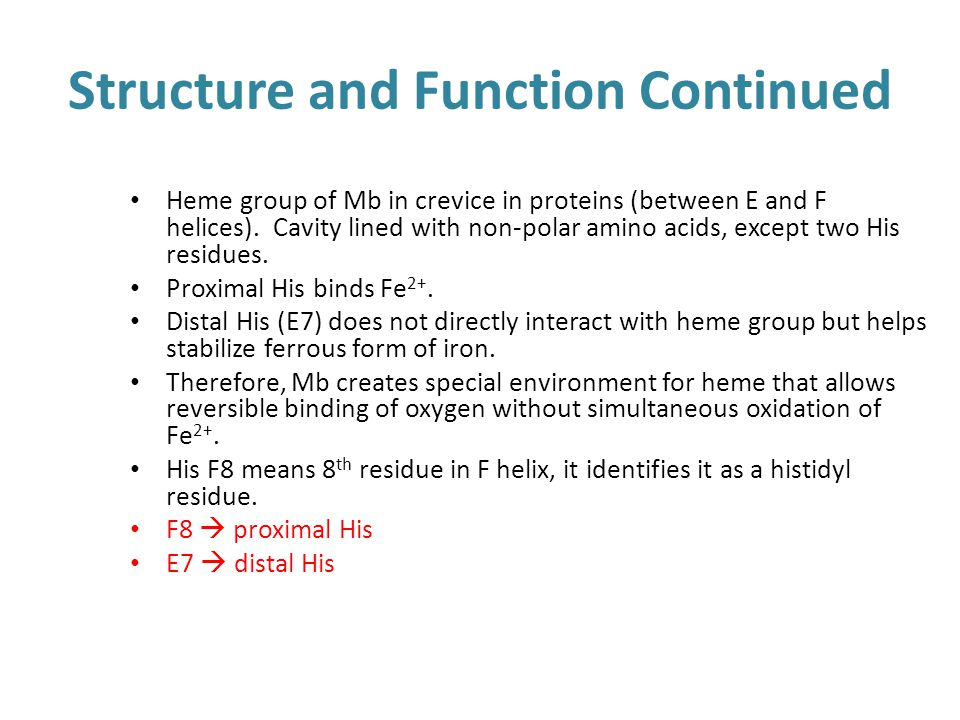 Structure and Function Continued
