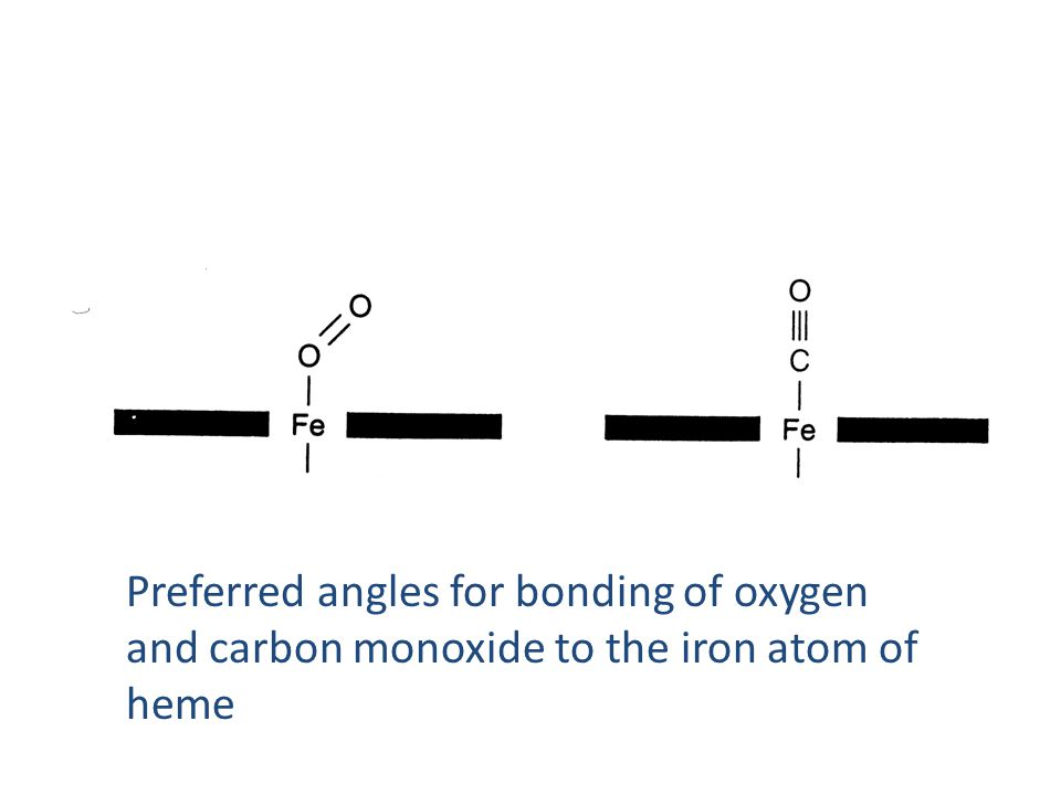 Preferred angles for bonding of oxygen and carbon monoxide to the iron atom of heme