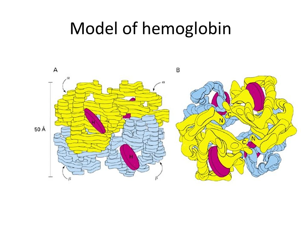 Model of hemoglobin