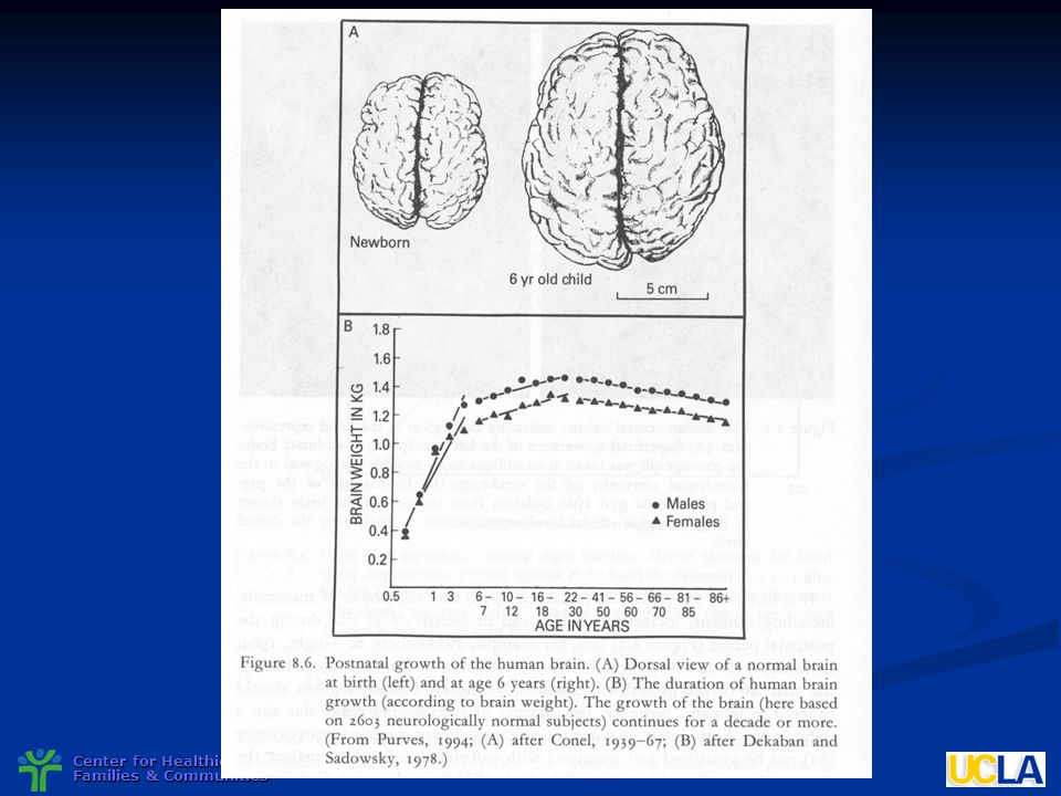 Brains are built over time, a significant proportion is constructed during the early years of life, and the capacity for change decreases with age