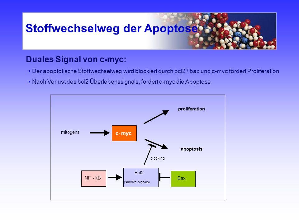 Stoffwechselweg der Apoptose