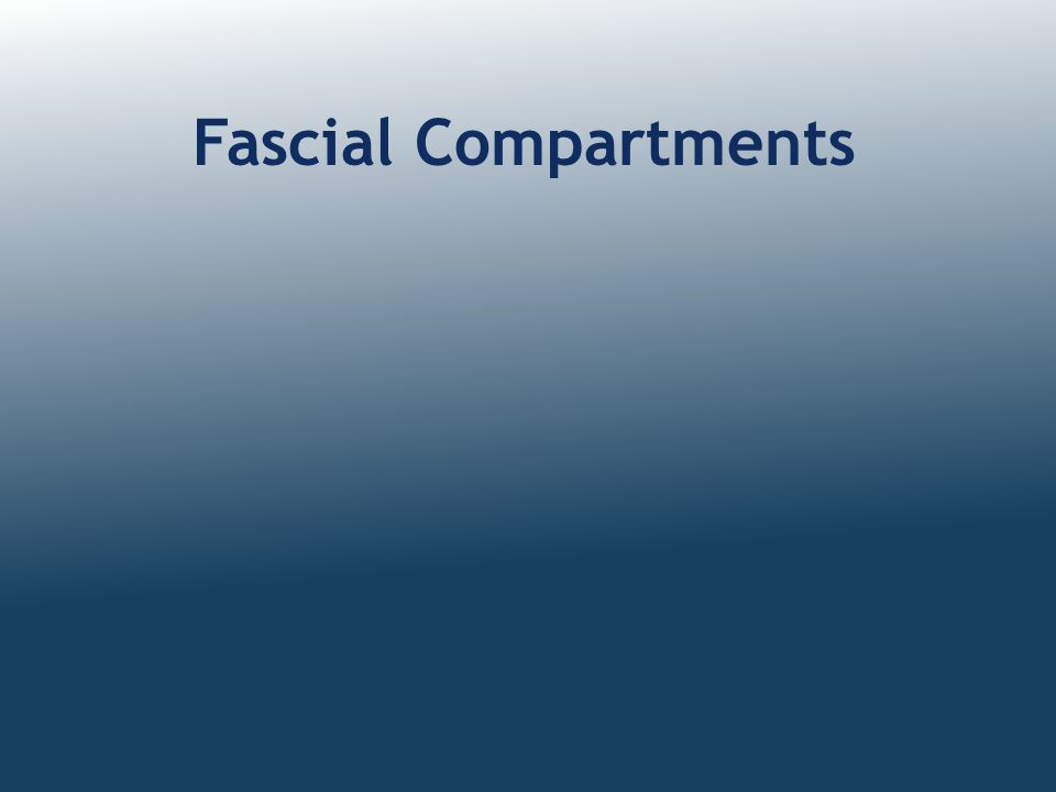 Fascial Compartments