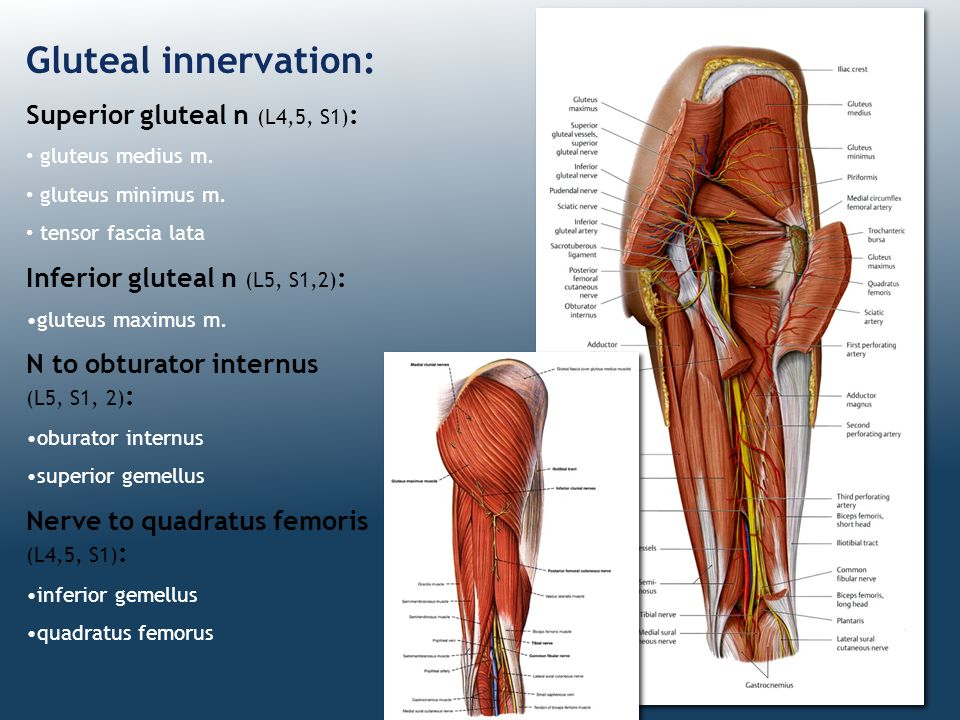 Gluteal innervation: Superior gluteal n (L4,5, S1):