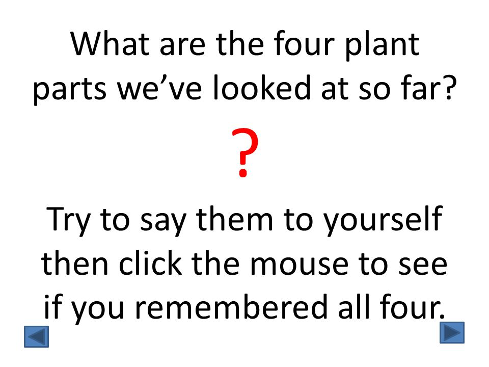 What are the four plant parts we've looked at so far