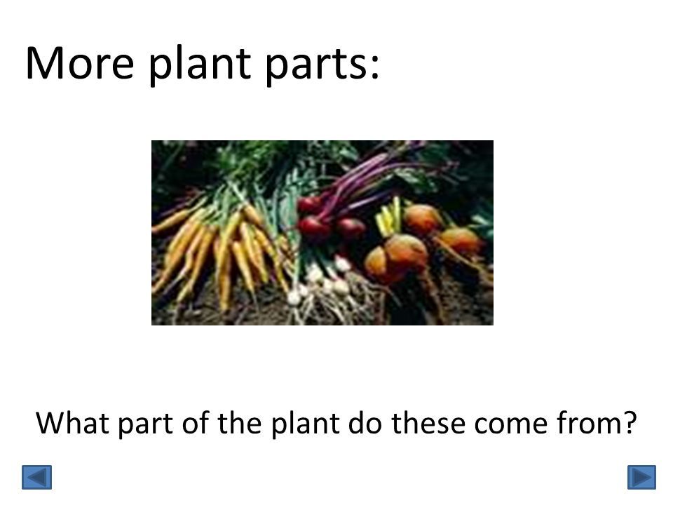 More plant parts: What part of the plant do these come from