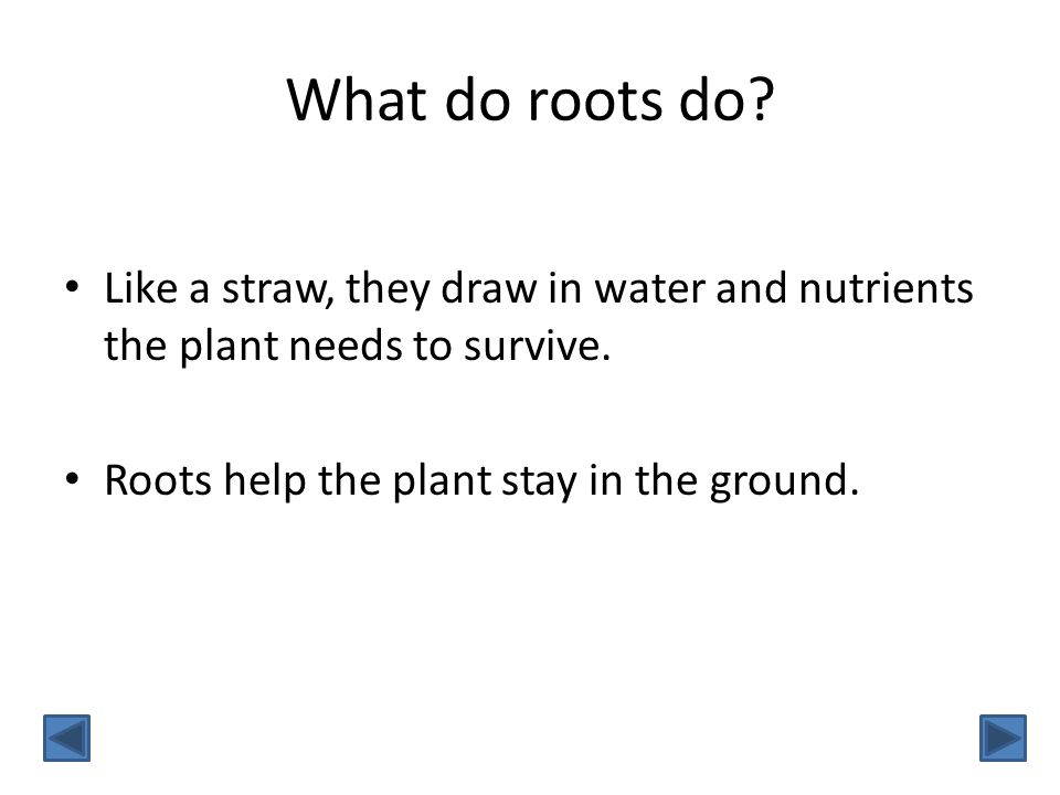 What do roots do. Like a straw, they draw in water and nutrients the plant needs to survive.