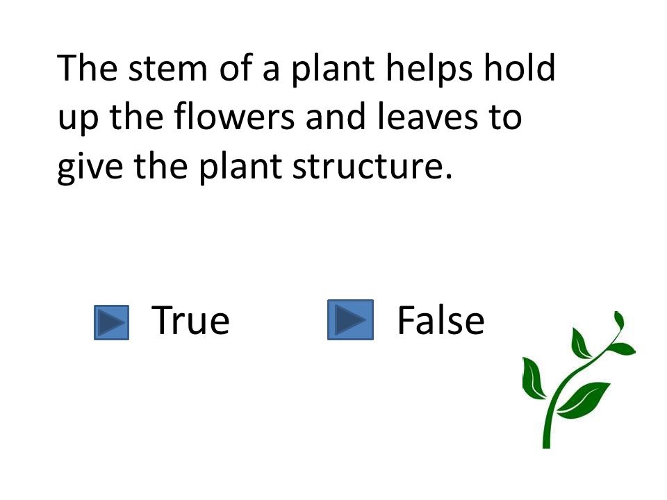 The stem of a plant helps hold up the flowers and leaves to give the plant structure.