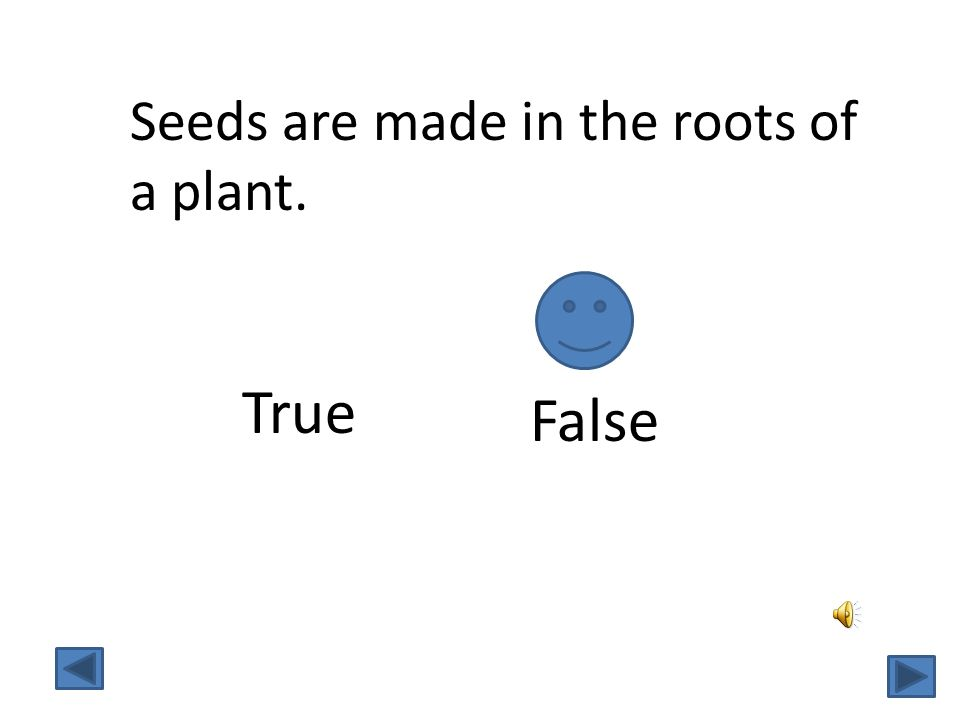 Seeds are made in the roots of a plant.
