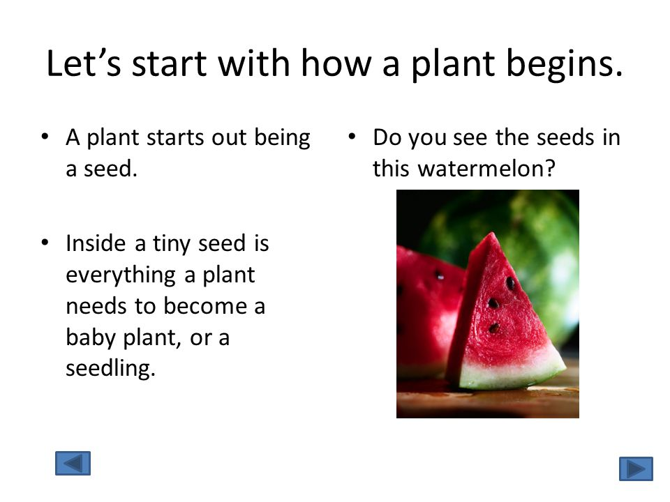 Let's start with how a plant begins.