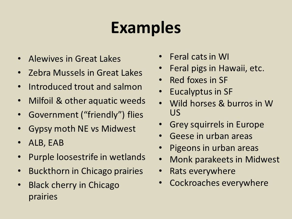 Examples Alewives in Great Lakes Zebra Mussels in Great Lakes