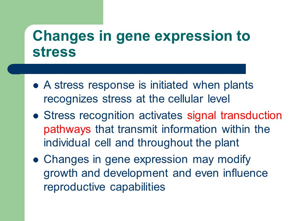 Changes in gene expression to stress